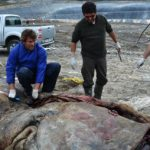 Scientists: 'Rubbish killed beached whale'