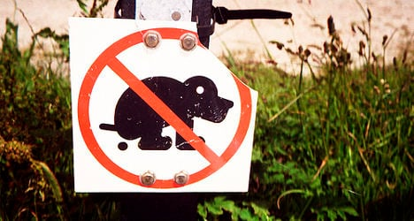 Spanish town mails dog poo back to owners