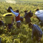 Man killed by 5 tonnes of falling grapes