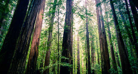 'Spanish winery will destroy US redwoods'