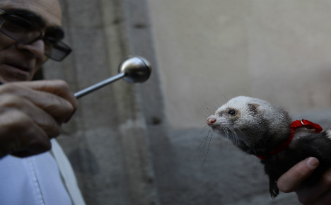 Spanish pets queue up for holy blessing