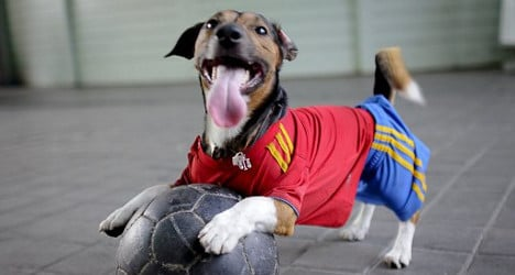 Football fan charged for throwing dog at ref