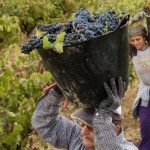 Spain becomes world's biggest wine producer