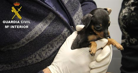 Spanish police rescue 180 smuggled puppies