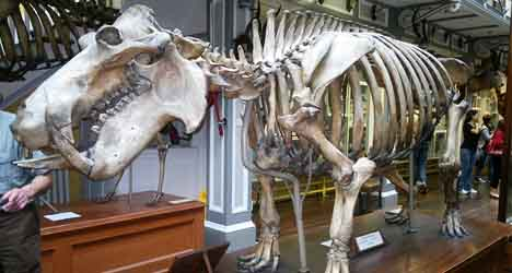 Found: Proof Spain was home to giant hippos