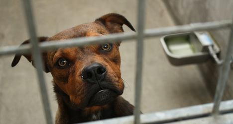 Spain tops euro table for abandoned pets