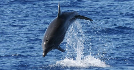 WWF calls for Canary Islands whale sanctuary