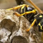 89-year-old killed in horror wasp attack
