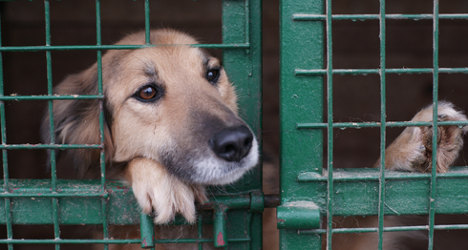 Animal lovers fight 'cruel' put-down rule for strays