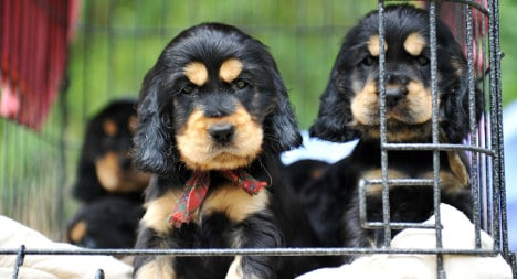 Spain to ban sale of cats and dogs in pet shops