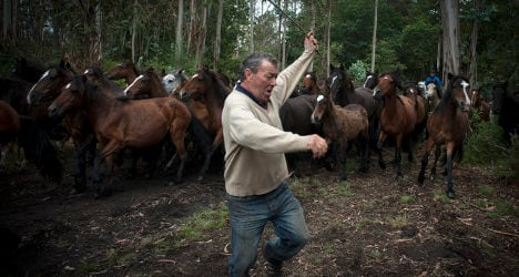 Spain's horse whisperers round up wild beasts