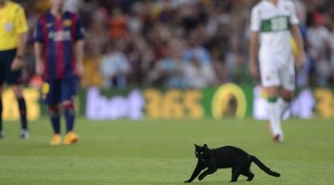 Black cat Spain's first pitch invader of season