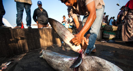 Spanish hotel giant signs up to shark fin ban