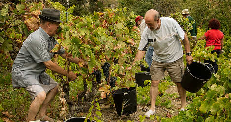 'Wine therapy' wins over tourists in Spain