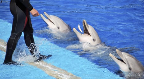 Dolphin trainer accused of abuse found dead