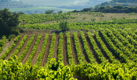 Wine: China overtakes France but Spain reigns