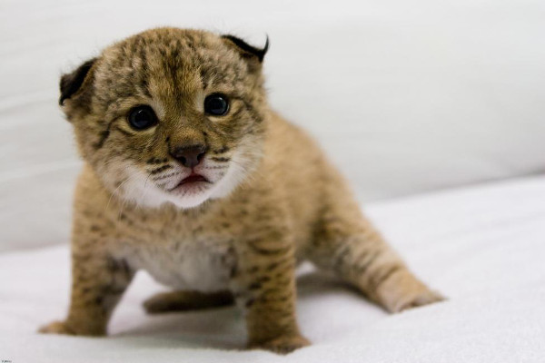 7 adorable animals on the brink of extinction