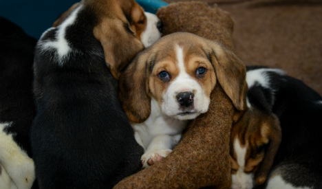 Vet who used puppies as drug mules arrested