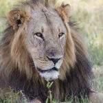 'Spaniards hunting lions in Africa are a disgrace'
