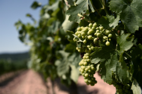 Grape Escape: Discovering the art of winemaking in the vineyards of La Rioja