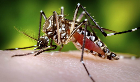 Spain on alert after first case of mosquito-borne virus detected