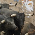 Bull gores 89-year-old man to death in Alicante