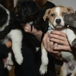 'No kill policy' for Madrid animal shelters under new pet welfare law