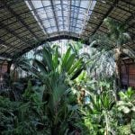 August: One of the only cool spots in Madrid at this time of year - the rainforest in the city's Atocha railway station. Photo: sherryabad/Instagram