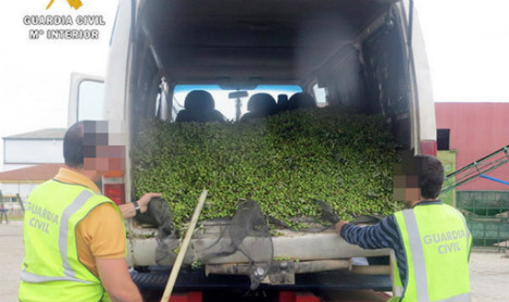 Vigilantes join special police teams to combat Spain's olive oil thieves