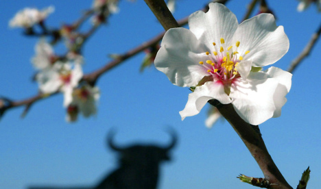 Warm winter brings early almond blossom and climate change alarm