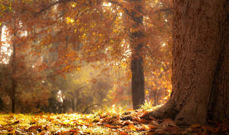 Could late autumn leaf fall pose security problem in Madrid?