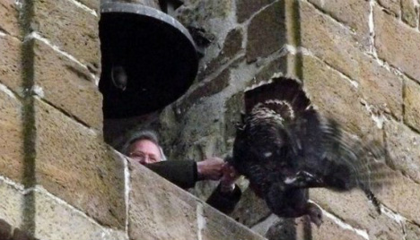Protesters lose fight to save turkey from bell tower plunge