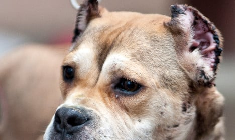 Spain arrests vets and hunters for cutting dogs' ears and tails