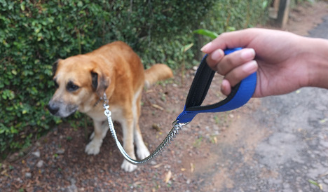 The war on dog poo: Spanish town turns to DNA testing