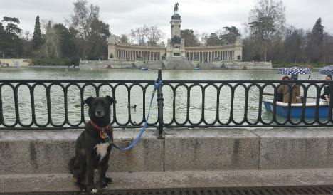 Bad owners to sweep streets in Madrid's war on dog poo