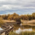 <b>Tablas de Daimiel National Park</b>: This national park is an area of wetland on the plain of La Mancha in the province of Ciudad Real. It is the smallest of Spain's national parks and is currently being expanded to improve the condition of the wetland.  Photo: Pablo García Armentano/Wikimedia