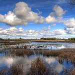 <b>Doñana National Park</b>: This national park, located in the provinces of Huelva and Seville in Andalusia consists of marshland, sand dunes and streams, which were made a nature reserve in 1969.Photo: Olmo1981/Flickr