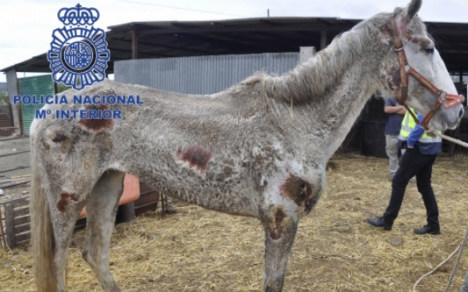 Two arrested over appalling animal neglect at Malaga farm