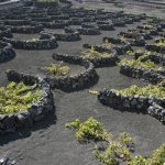 <b>Wine</b>: The vineyards of Lanzarote look like they have appeared off the set of a science fiction film. The moon-like landscape is fascinating and the wine... delicious! Must be all that volcanic soil...Photo: Paul Appleton/Flickr