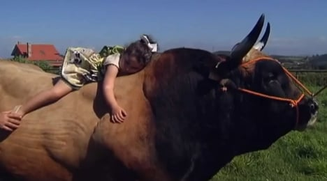 Girl's best friend: Four-year-old finds comfort with a bull