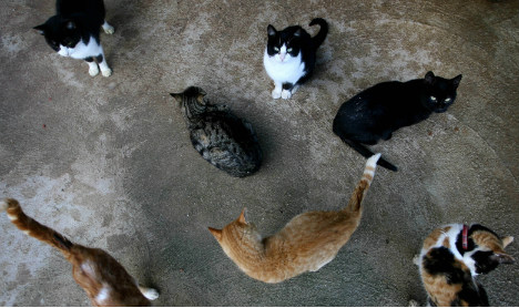 Charity wants answer from US Navy over disappearing cats