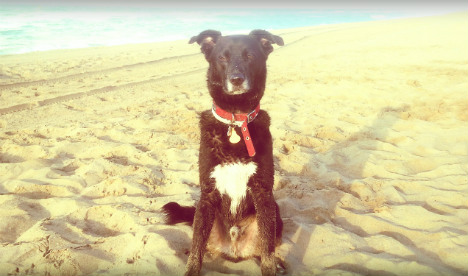 Woof! How to find dog-friendly beaches in Spain