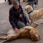More than 130,000 dogs and cats rescued in Spain in 2015