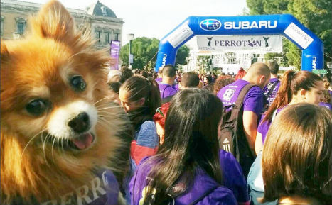 Thousands run with dogs in Madrid to fight against cruelty