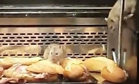 Madrid bakery closed after rats caught nibbling sandwiches