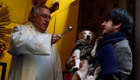 Pet dogs dress up for St Anthony blessing in Madrid church