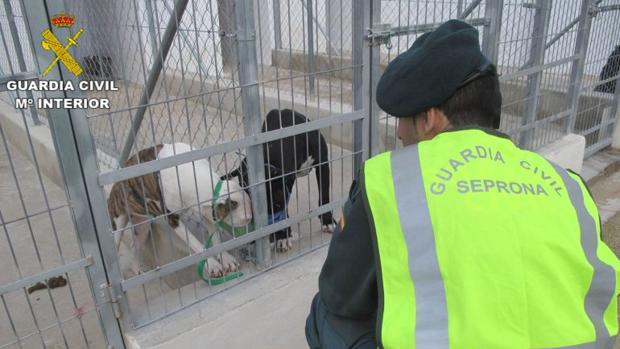 Man mauled to death by pack of dogs in southern Spain