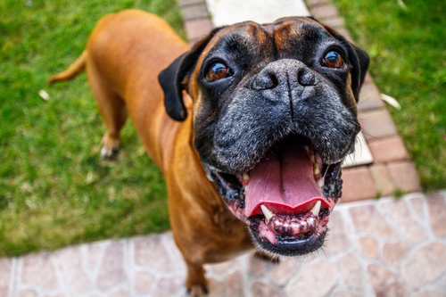Spain's bans docking of dogs tails