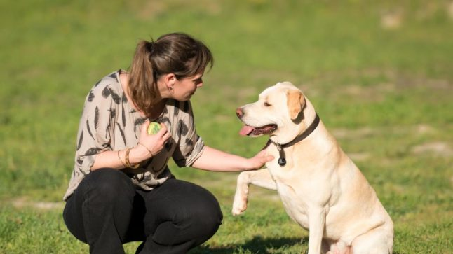 Meet Blat: The Barcelona dog that can detect lung cancer from sniffing a person's breath