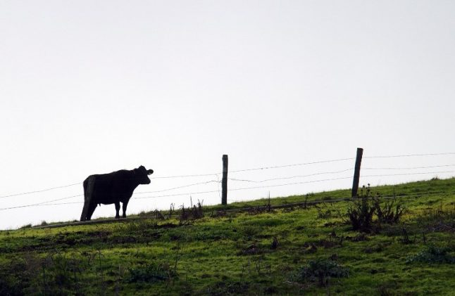 Spain reports case of 'mad cow disease'